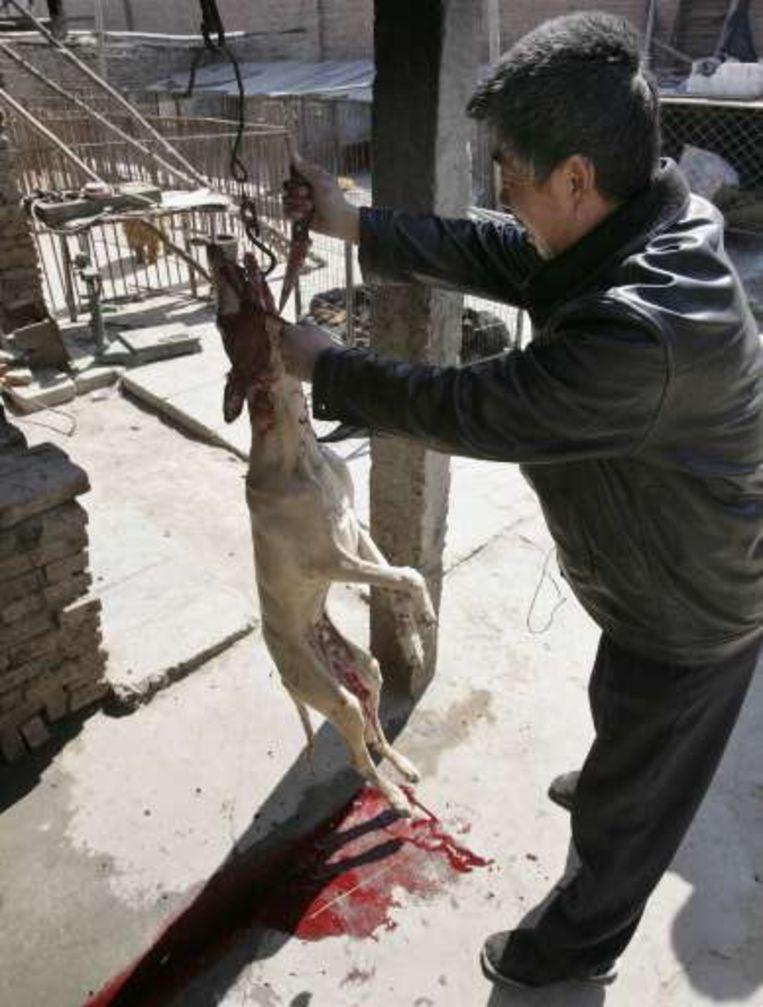 De hond wordt aan een haak gehangen en gevild