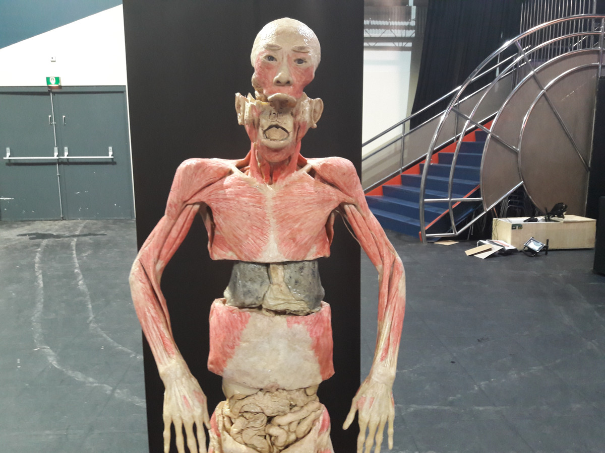 onderzoek naar herkomst lichamen real human bodies expo in breda