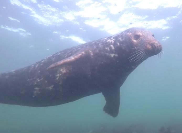 Screenshot van de klappende zeehond