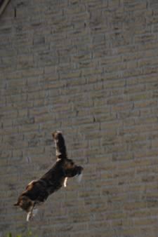 Kat valt acht meter en komt op pootjes terecht