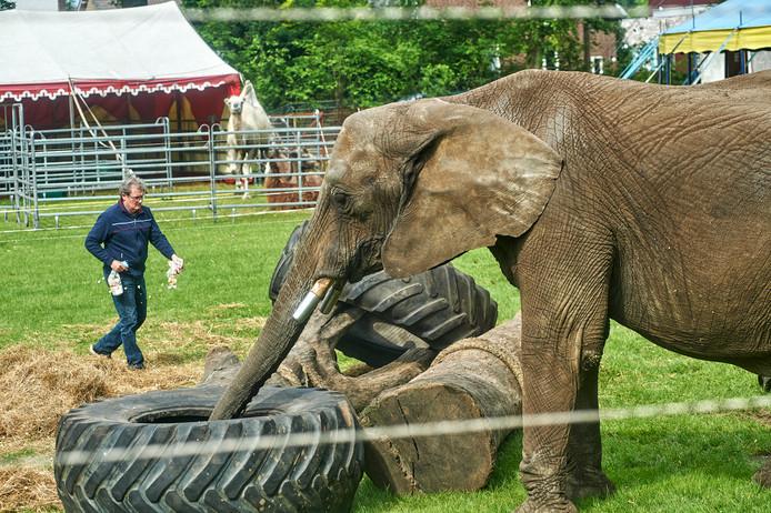 Circus Freiwald in het Julianapark in Veghel met olifant Buba.