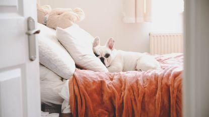 2 op de 3 slapen met huisdier in bed, jij ook?
