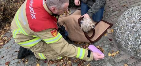 Brandweer redt hondje uit huis in Wapenveld