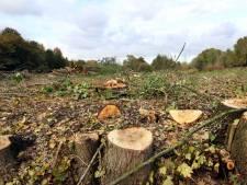 'Bomenkap in de Broekpolder? Ja, maar 't wordt weer groen'