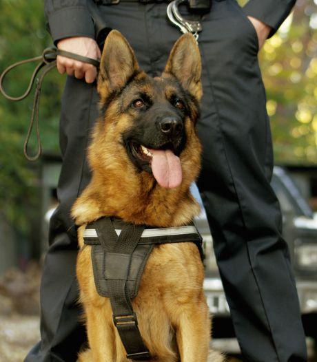 Inbrekers betrapt in Leeuwarden en overmeesterd met hulp van politiehond