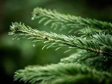 Kerstbomenasiel verwelkomt nieuwe bomen