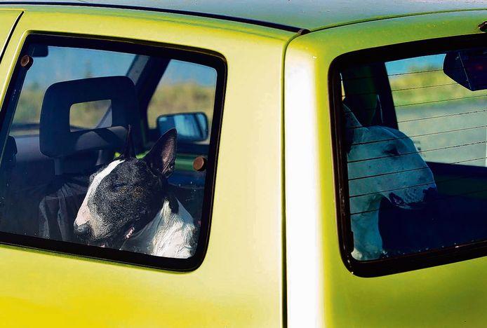 Auto's geparkeerd met potdichte ramen zijn geen pretje voor honden. De honden op de foto zijn overigens niet de honden uit het verhaal.