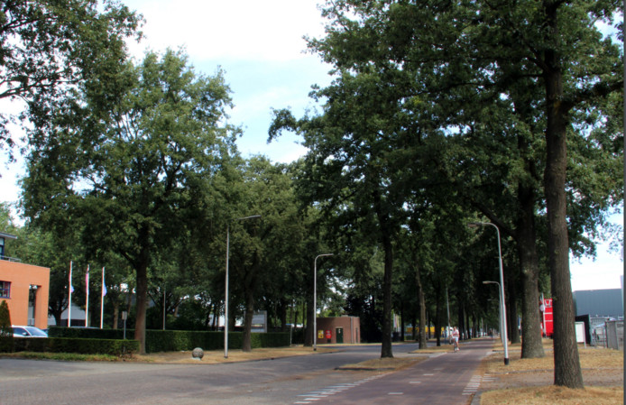 Alle bomen in de middenberm van de Kraaivenstraat verdwijnen om het fietspad te verbreden.
