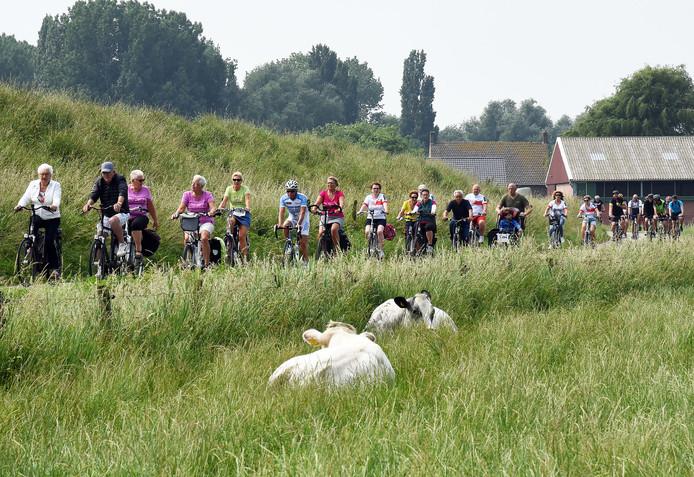Lang lint fietsers eerdere editie Zeeuws-Vlaamse Delta Ride for the Roses.