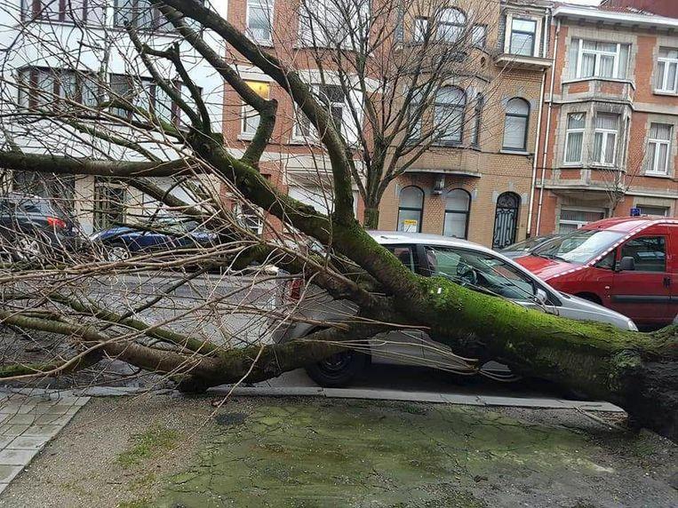 In de Diamantlaan in Schaarbeek viel een boom op een auto.
