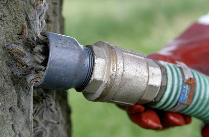 Verwijderen van rupsennesten, kan door afzuigen of wegbranden.