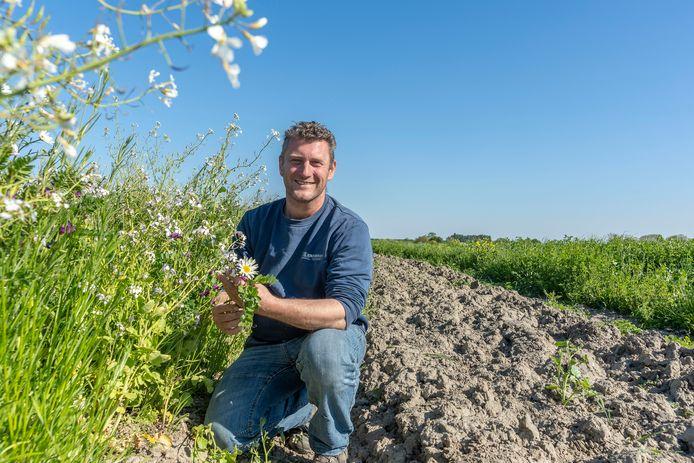 Teler Iman Minnaard uit 's-Heer Abtskerke is één van de akkerbouwers die al langer akkerranden inplant en werkt met strokenteelt, zodat boerenlandvogels zich er kunnen nestelen.