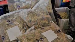 Onbesproken papa van drie smokkelt 44,5 kg cannabis
