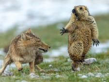 Et la plus belle photo animalière de l'année est...
