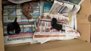 Onverlaat zet pasgeboren kittens in kartonnen doos klaar voor de ophaaldienst, tussen papier- en pmd-afval