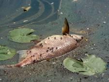 Advies van Woudrichem en Aalburg: ga voorlopig niet zwemmen in de Afgedamde Maas