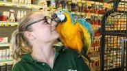 Kim overwint hoogtevrees om papegaai te redden: 'Ik ben verliefd geworden op het dier'