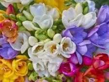 Zo zorg je ervoor dat je tuin in de zomer vol bloemen staat