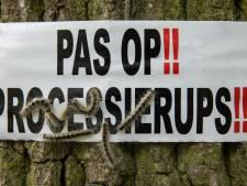 Rode Kruis: Nederlander doet het fout na insectenbeet of contact eikenprocessierups