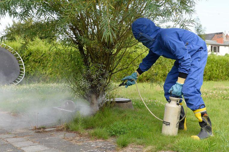 Een brandweerman gaat een wespennest te lijf.