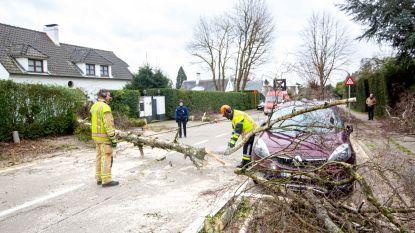 Omgewaaide boom komt op auto terecht