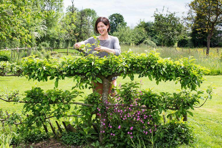 Leer snoeien in de boomgaard  van Frieda Pauwels (themabeeld).