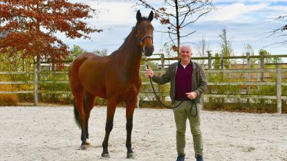 Vlaams paard verkocht aan Saoedi-Arabie
