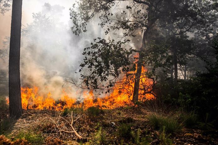 Bosbrand ten zuiden van Gilze, vorig jaar juli.