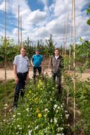 Bert Snel, Peter Mulder en Niels Mauritz (vlnr) bij de bloemenstroken tussen de bomenrijen.