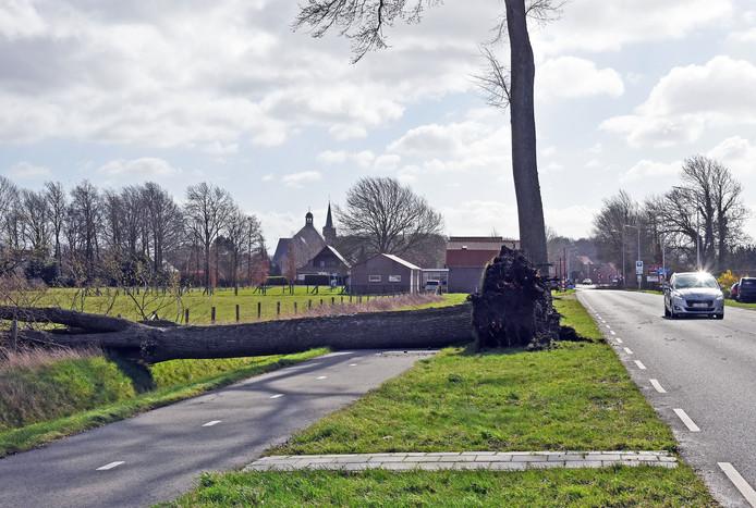 Een omgewaaide boom bij Aardenburg blokkeert het fietspad.