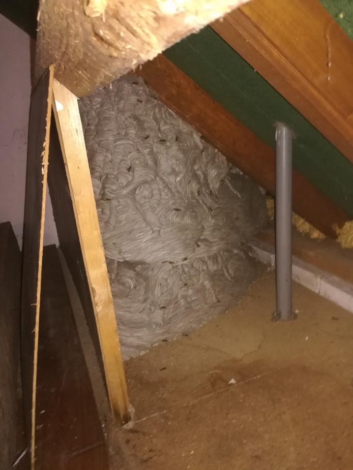 Het gigantische wespennest op de zolder in Lieshout.