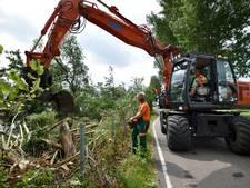 'Bomen langs Weiweg al  ziek en rot voor ongeval'