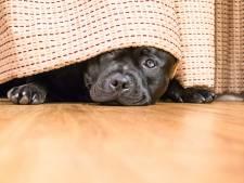 Klein hondje wordt doodgebeten door andere viervoeter, hulp mag niet meer baten