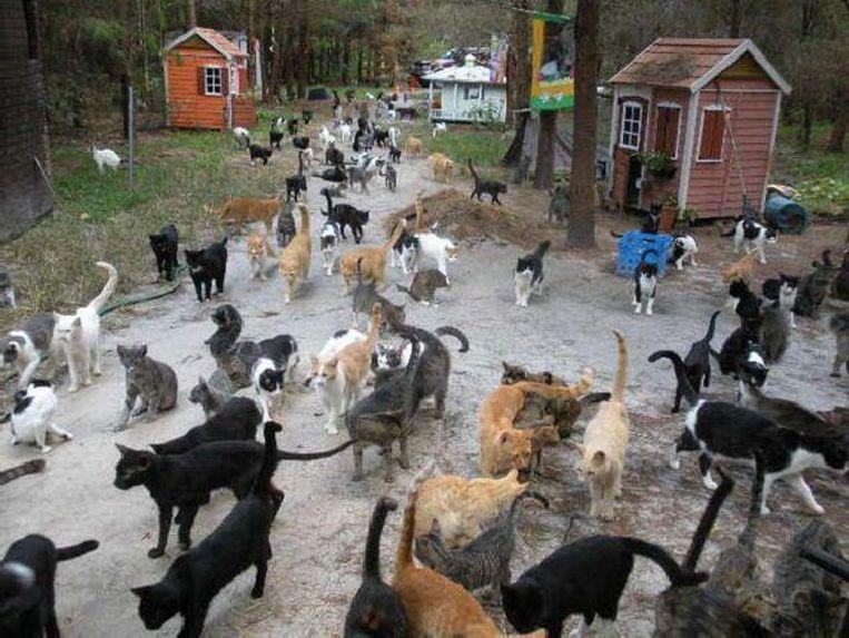 In dit Turks dorpje luisteren de katten naar Mozart en Beethoven