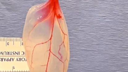 Wetenschappers vormen spinazieblaadjes om tot kloppend hartweefsel