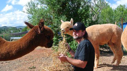 """""""Op YouTube zelf alpaca's moeten leren scheren"""""""