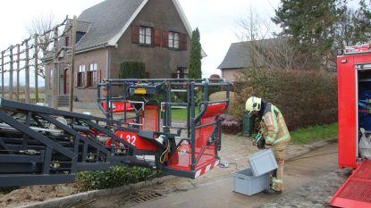 Lichte stormschade in Limburg: omgewaaide bomen en kapotte daken