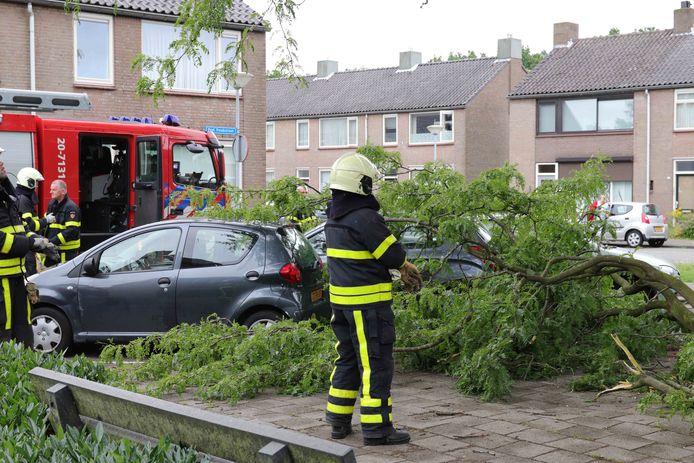 Afgebroken tak in Waalwijk.