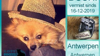 Baasjes van mini-Kees schakelen Lost Dogzzz in na verdwijning
