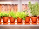 Mettez vos plantes fragiles dans des pots ou des conteneurs et laissez-les hiberner à l'intérieur.