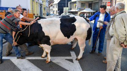 Nieuw reglement moet jaarmarkten aantrekkelijker maken voor veehouders én bezoekers