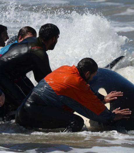 Rammende orka's hadden redenen gestrest te zijn