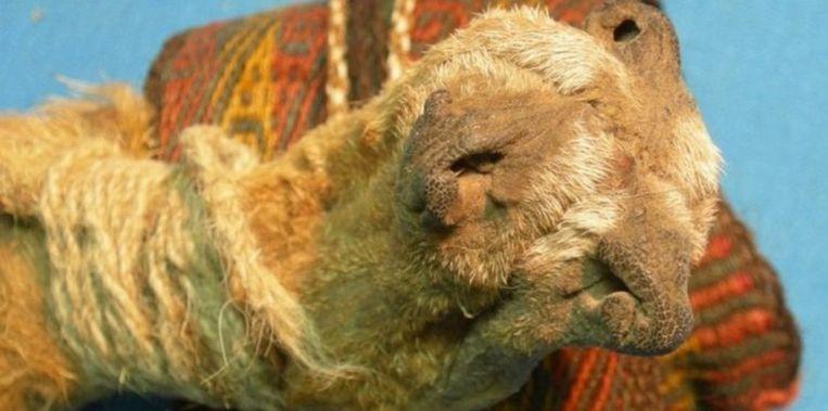 Het opmerkelijke tasje gemaakt van samengebonden vossensnuiten