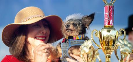 """Ce chien a été élu """"le plus moche"""" du monde"""