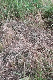 Ondanks noodklok van omwonenden blijft het waterschap maaien langs de sloot in Bronkhorst
