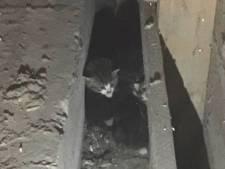 Vier piepende zwerfkittens uit Maassluise loods gered