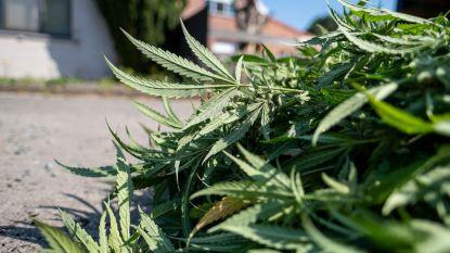 """Dertiger wordt betrapt met bijna zes kilogram cannabis: """"Ik moest het gaan ophalen en kreeg er vijfhonderd euro voor"""""""