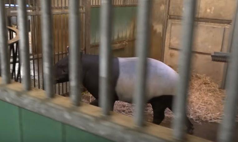 Ze konden onder meer achter de schermen tot bij de tapirs geraken.