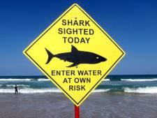 17-jarige Australische surfer doodgebeten door haai: vijfde fatale aanval dit jaar
