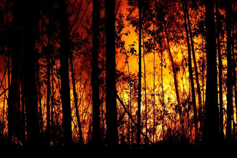 Verwoestende branden bij de steden Orbost en Lakes Entrance in oost Gippsland. Beeld Getty Images